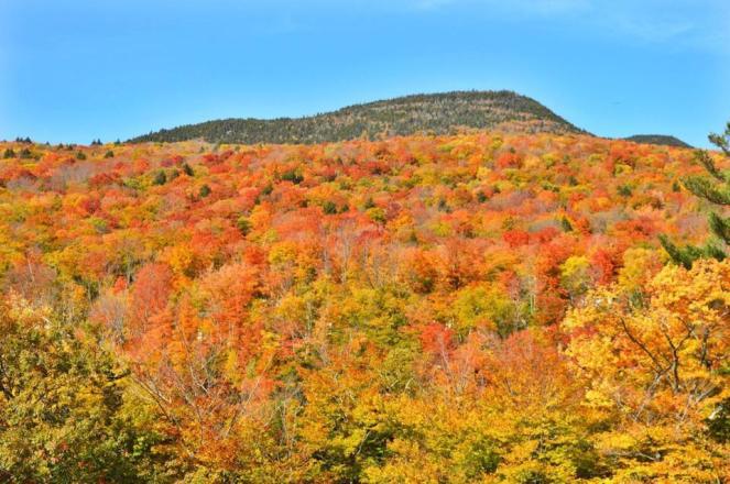 fall-colors-1